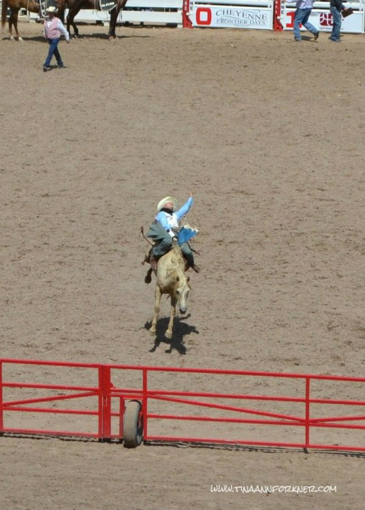 Bronc Rider at Cheyenne Frontier Days 2012 (Photo: TAForkner)